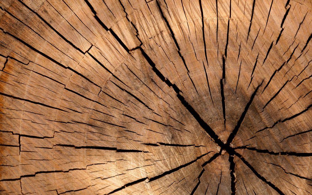 ¿Cuál es la mejor madera para exterior?
